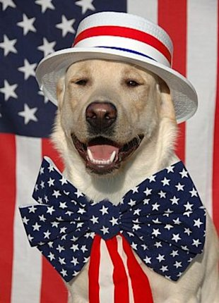 Happy dog, Happy Flag Day