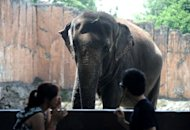 "The historic Manila Zoo, once a major attraction of the Philippines, now finds itself the target of criticism for the condition of its animals, particularly its ""star"", a 38-year-old elephant named Mali"