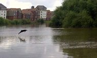 Dolphin Leaps Out Of River In Rare Sighting