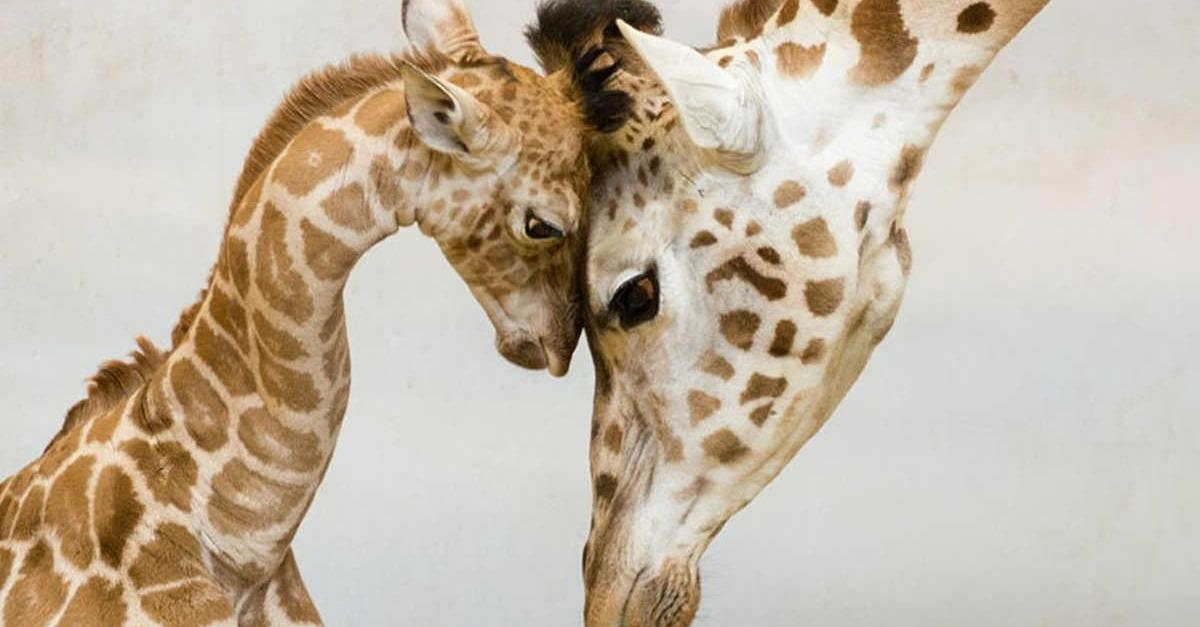 13 Heartwarming Animals Pictures You'll Love