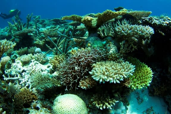 Isolated Coral Reefs Can Heal Themselves