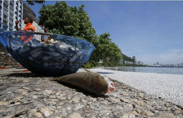 A dead fish is seen next to…