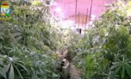 Vast Cannabis Factory In Mussolini Tunnel