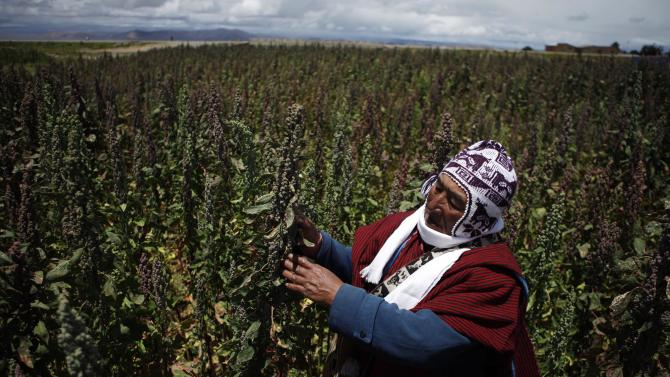 Boom in quinoa demand stresses Bolivia highlands