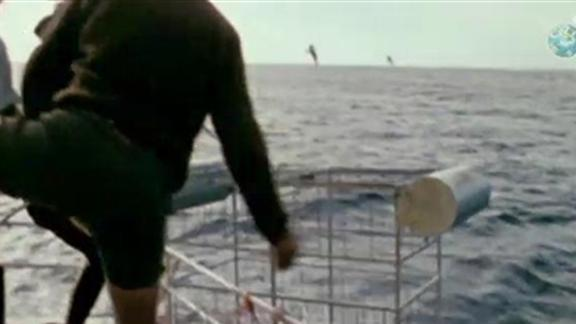 The Very First Shark Cage