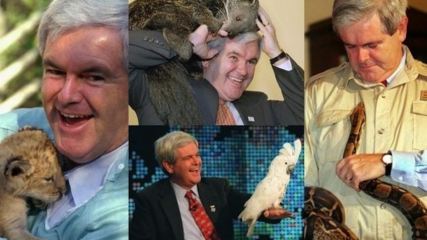 Only Penguin Wants a Piece of Gingrich