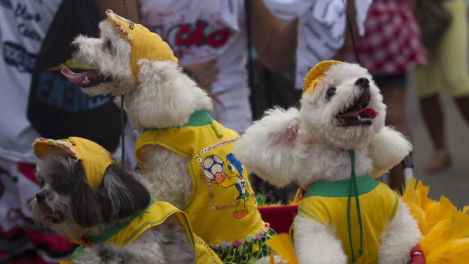 """Dogs wear Brazil's national soccer team jerseys during the """"Blocao"""" dog carnival parade in Rio de Janeiro, Brazil, Sunday, Feb. 3, 2013. According to Rio's tourism office, Rio's street Carnival this year will consist of 492 block parties, attended by an estimated five million Carnival enthusiasts. (AP Photo/Silvia Izquierdo)"""