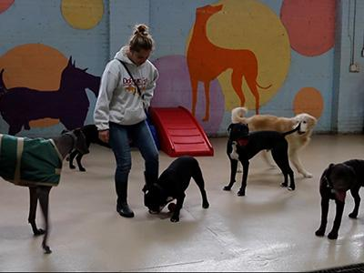 Dog Flu Spreading in Midwestern States