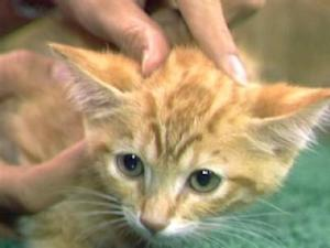 Adopt These Kittens From The OSPCA