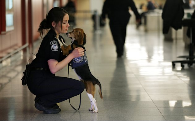 In this Feb. 9, 2012 photo, Meghan Caffery, a U.S. Customs and Border Protection Agriculture Specialist, hugs Izzy, an agricultural detector beagle whose nose is highly sensitive to food odors, at Joh