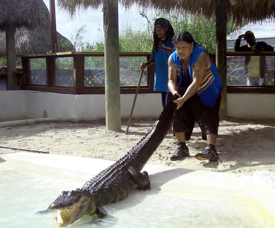 Florida Indian tribe's last alligator wrestler bows out