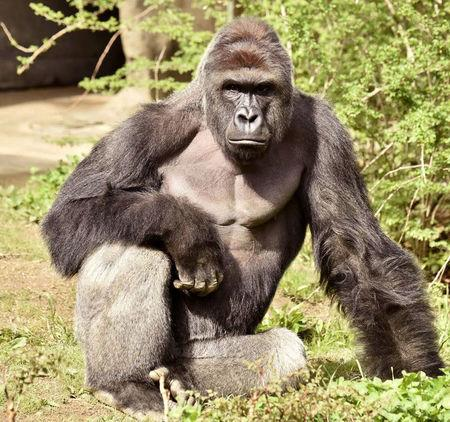 Killing of gorilla to save boy at Ohio zoo sparks outrage