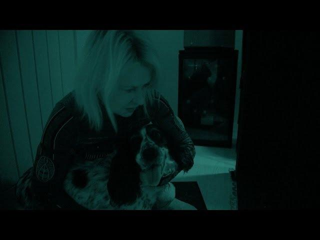 Dog battles cat in night vision test for domestic pet world domination