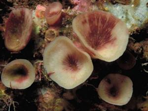 Strange Cave-Dwelling Coral Discovered in Tropical Reefs