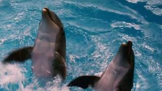 Dolphin Tale: Featurette 2