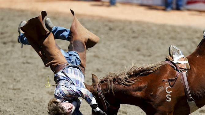 "McCallum from Red Deer, Alberta, gets bucked off the horse ""Yucatan Margie"" in the novice bareback event during the Calgary Stampede rodeo in Calgary"