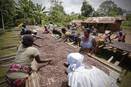 Women from a local cocoa farmers association called BLAYEYA work with cocoa beans in Djangobo, Niable in eastern Ivory Coast