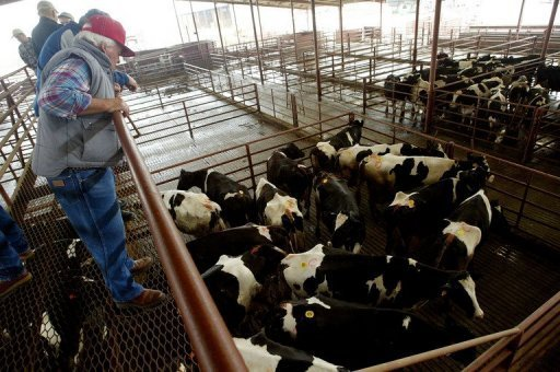 Officials insisted the infected cow &quot;at no time presented a risk to the food supply or human health&quot;