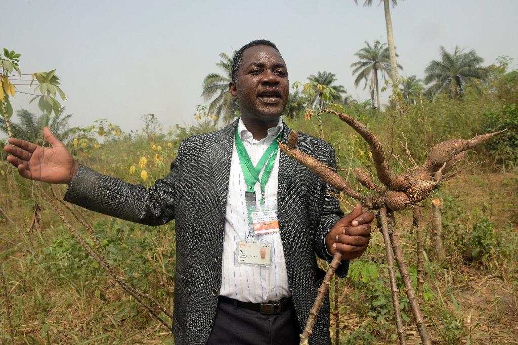 Staple cassava demonstrates Nigeria's economic vulnerability