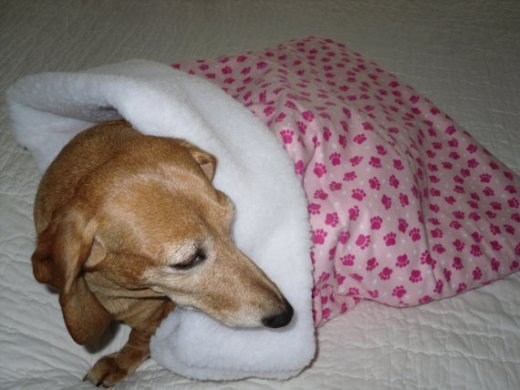 Pawprint Dog Sleeping Bag