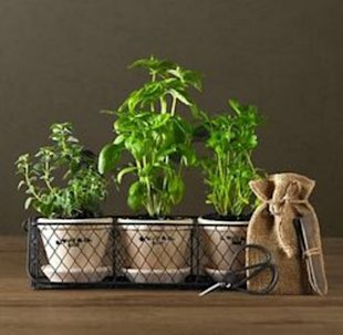 Herbal potting remedies