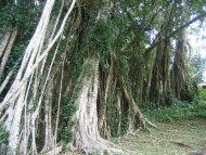 瓜分化及零星化——台灣森林資源管理的危險信號
