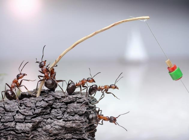 fantasy world of ants