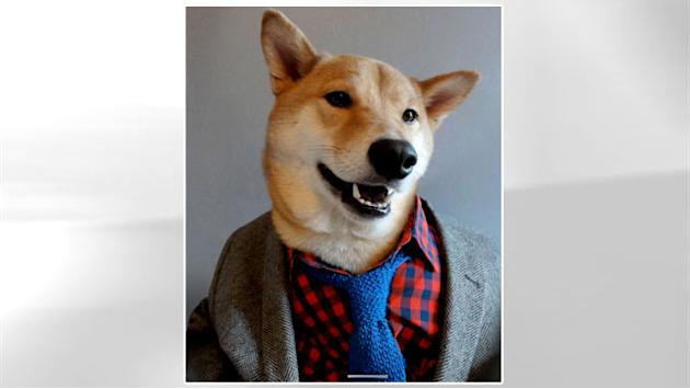 Bodhi the Stylish 'Menswear Dog' Offers Fashion Advice