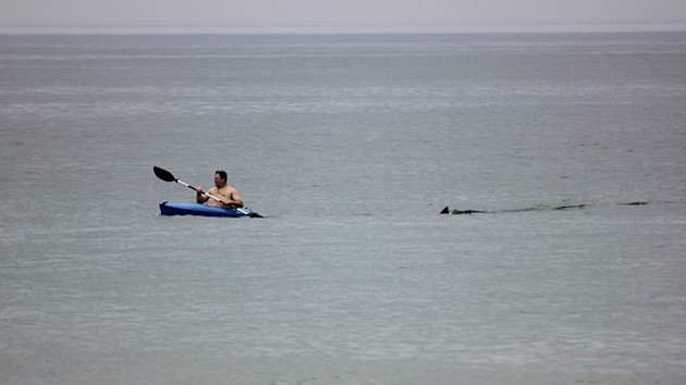Great White Shark: Cape Cod Beach Reopens After Sighting (ABC News)