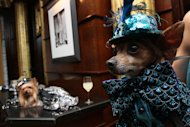 "Dressed for the occasion, Eli, a Chihuahua from New York, foreground waits for the start of the most expensive wedding for pets Thursday July 12, 2012 in New York. The black-tie fundraiser , where two dogs were ""married"", was held to benefit the Humane Society of New York. (AP Photo/Tina Fineberg)"