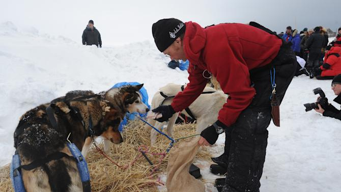 Musher Mitch Seavey tends to his dogs after arriving at the Unalakleet, Alaska, checkpoint Sunday, March 10, 2013, during the Iditarod Trail Sled Dog Race. (AP Photo/The Anchorage Daily News, Bill Roth)  LOCAL TV OUT (KTUU-TV, KTVA-TV) LOCAL PRINT OUT (THE ANCHORAGE PRESS, THE ALASKA DISPATCH)