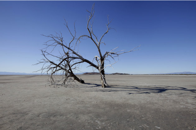 In this Dec. 27, 2010 photo, the barren earth and dead trees reveal the blight of the Salton Sea, where water conservation efforts are attempting to restore the once natural playground and tourist sit