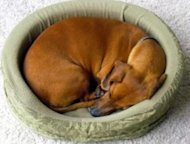 How can you choose the best bed for your dog?