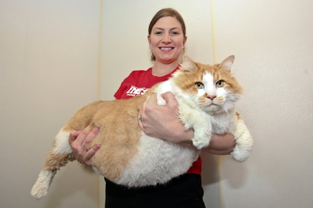 Fattest cat
