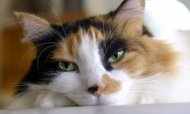 Cat Infection 'Being Passed On To Thousands'