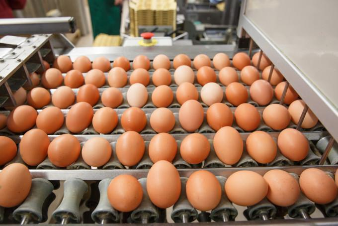 What You Should Know About the Shift to Cage-Free Eggs