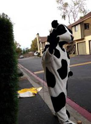 This undated photo released by the Redlands, Calif., Police Department, shows an unknown person posing in a stolen cow costume in San Bernardino, Calif., for an ad that was seen by police on Craigslist. Redlands police said two 7-foot cow costumes created for the Chick-fil-A chain were nabbed in separate restaurant burglaries, turned up for sale for $350 apiece on Craigslist in late October. An undercover officer arranged to buy the bovine attire in time for Halloween, and when the seller produced the black-and-white outfits he was arrested on Oct. 30, 2013. Robert Michael Trytten, 43, of Riverside, is being held on suspicion of possession of the stolen property on $275,000 bail. (AP Photo/Redlands Police)