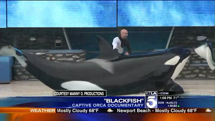 Santa Monica Lawmaker Proposes Bill to Ban Killer Whale Shows