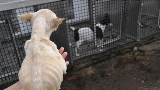 ASPCA uses USDA photos in fight over puppy mills