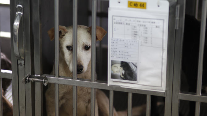 In this photo taken on Monday, April 9, 2012, a dog sits in a cage behind his paperwork before being put down by lethal injection at a government-run shelter in Taoyuan, northern Taiwan.  In an ongoing project, Taiwanese photographer Tou Chih-kang makes portraits of shelter dogs in the final moments of their lives before being  put down by lethal injection. Tou has been visiting dog shelters for two years now, making human-like portraits that give a sense of dignity and esteem to some 400 canines, in hopes of educating the public on the proper care of pets. This year Taiwanese authorities will kill an estimated 80,000 stray dogs at 38 pounds scattered throughout the island. (AP Photo/Wally Santana)