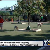 Philadelphia Celebrates National Dog Day