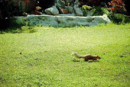 Wildlife: There is an East Coast/West Coast Squirrel War Raging in LA
