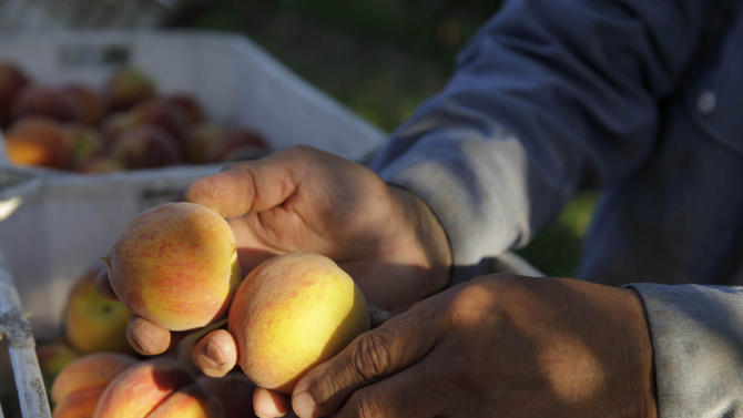 Small farmers turn to creative projects to survive