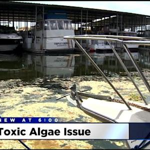 Algae Taking Over San Joaquin County Delta Waterways