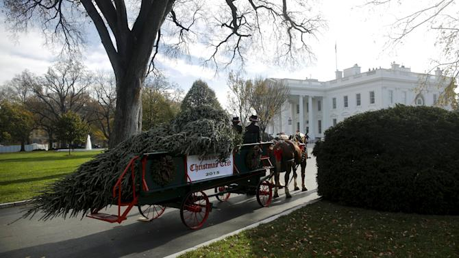 The Official White House Christmas Tree arrives at the White House in Washington