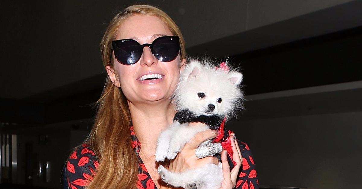 10 Celebrities Totally Obsessed With Their Pets