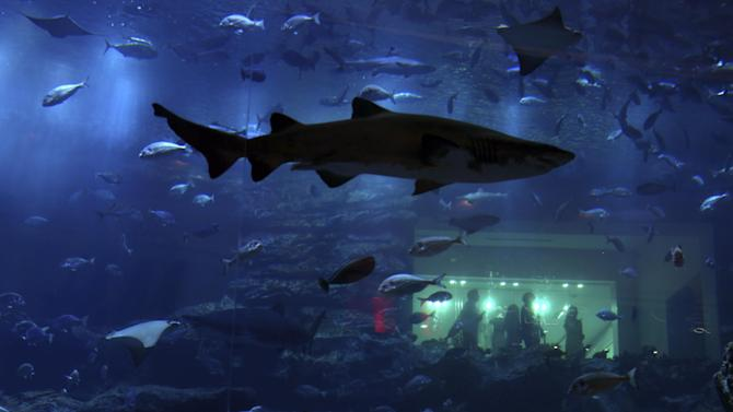 Tourists watch a shark swim in a tank at The Dubai Aquarium and Underwater Zoo at The Dubai Mall in Dubai, United Arab Emirates, on Tuesday, Oct. 21, 2014. The 10-million liter (2.6-million gallon) tank is viewable to visitors walking through the mall. (AP Photo/Jon Gambrell)