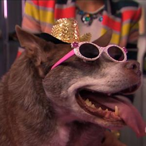 World's Ugliest Dog Gets a Makeover
