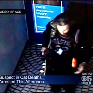 Man Accused Of Throwing 2 Cats Into San Francisco Bay Arrested