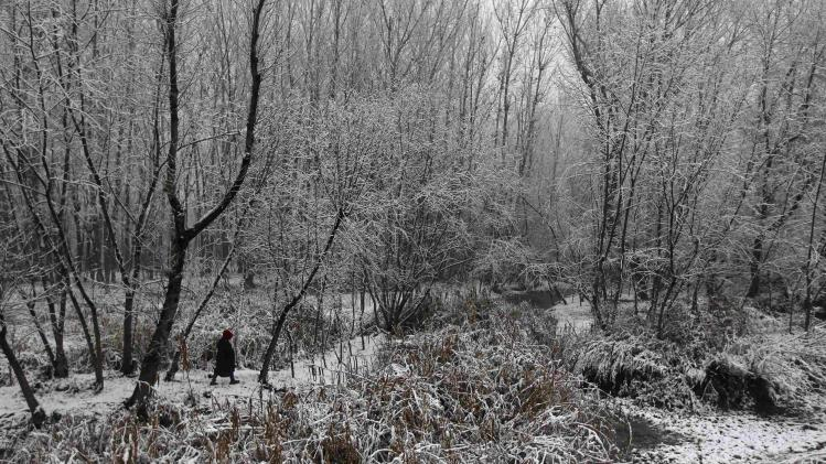 A Kashmiri boy walks through snow-covered trees during the season's first snowfall on a cold winter morning in Srinagar